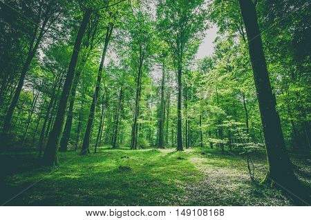 Green Trees In A Forest At Springtime