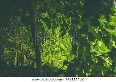 Rainforest With Green Plants And Vegetation
