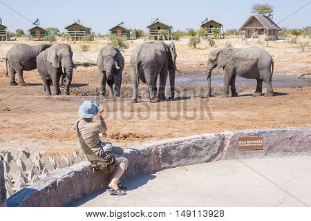 Tourist photographing Elephants with smartphone very close to the herd. Adventure and wildlife safari in Africa. People traveling concept.