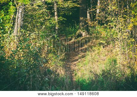 forest path that goes up and leads into the forest