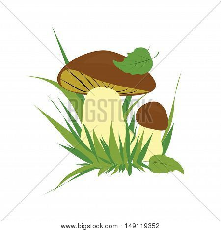 Boletus isolated over white background vector colorful collection. illustration of mushrooms on a white background.