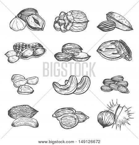 Nuts Set Hand Draw Sketch. Vintage Style. Vector illustration
