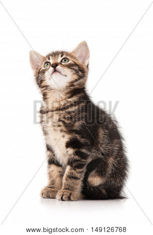 The curious kitten looks up isolated on white background