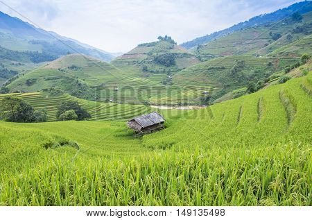 Rice fields on terraced of Mu Cang Chai YenBai Vietnam