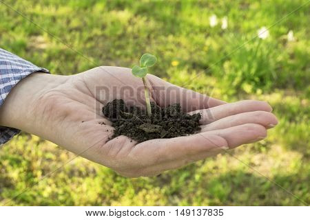 Plant in hand in spring time. Ecology concept.