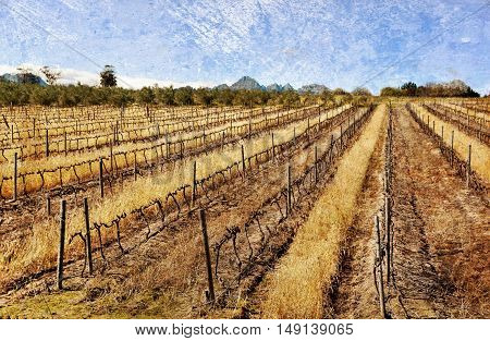 Landscape with a bare Vineyard in Winter