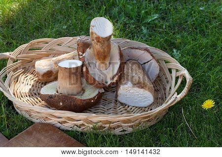 Raw Boletus Mushrooms