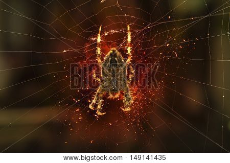 Spider hanging on a spider web. Fire illustration