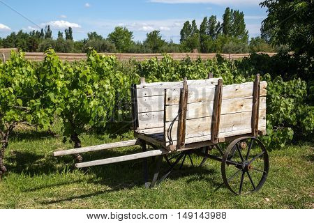 An old wooden cart in front of a vineyard in Mendoza, Argentina
