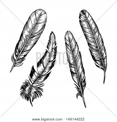 Feathers Set Hand Draw Sketch Boho or Ethnic Style. Vector illustration