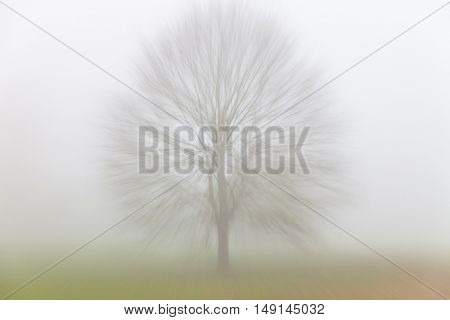 Zoom motion blurred Autumn or Fall tree in a field covered in fog or mist
