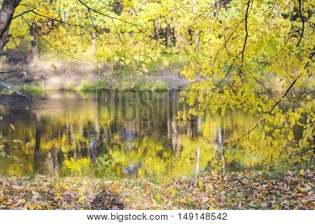 background autumn landscape panorama yellow twig linden  above the forest river