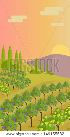 Grapes leaves in a sunny vineyard. Vineyard langscape. Rural landscape with vineyard and grapes bunches. Natural background. Landscape with rolling hills and valleys. Beautiful rows of grapes.