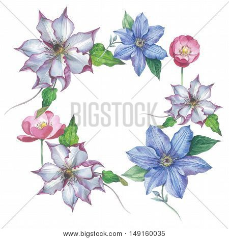Wildflower clematis flower frame in a watercolor style isolated. Full name of the plant: clematis, wisteria. Aquarelle flower could be used for background, texture, pattern, frame or border.