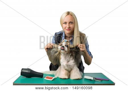 Beautiful smiling woman groomer with funny and cute shih-tzu dog with its tongue out - isolated on white