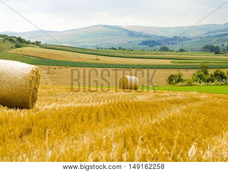 Obtaining cereals from wheat after crop outdoors..