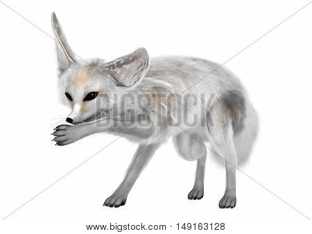 3D Rendering Fennec Fox On White