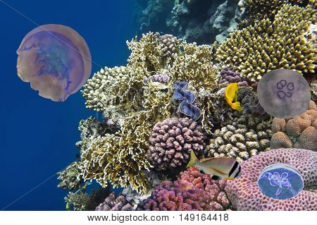 Jellyfish corals and fish on the ocean floor. Red Sea