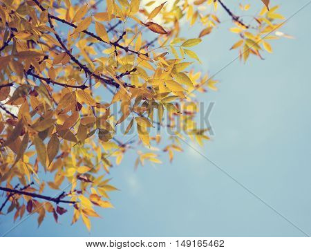 Colorful foliage in the autumn park. Autumn leaves sky background