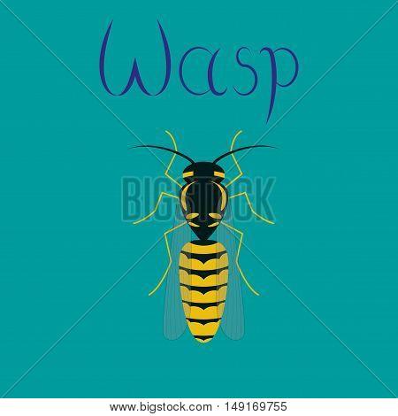 flat illustration on stylish background insect wasp