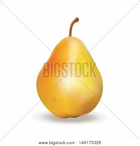 Pear. Vector illustration. 3D  realistic fruit isolated