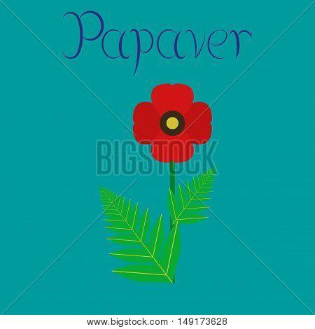 flat illustration on stylish background flower papaver