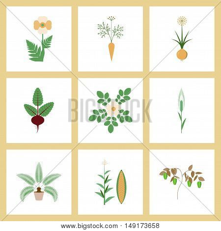 assembly of flat Illustrations papaver daucus carota allium beta rosa majalis phoenix zea mays pepper