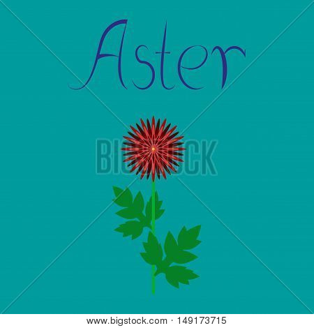 flat illustration on stylish background flower aster