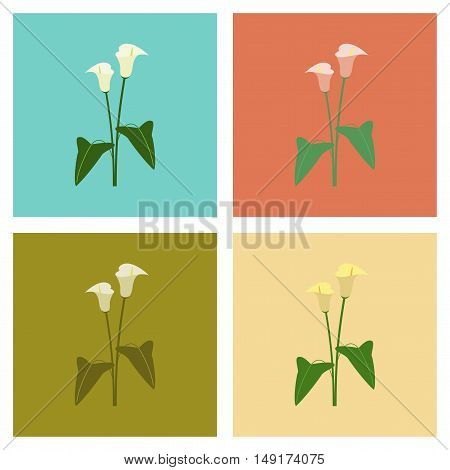 assembly of flat Illustrations floral flower calla