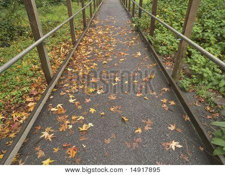 Leafy Wet Path