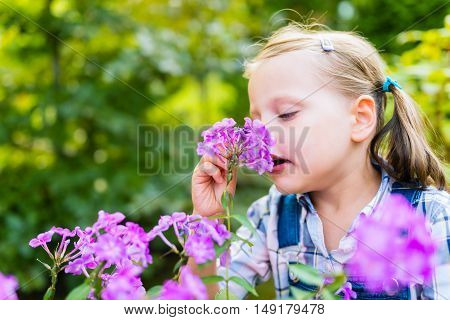 Young beautiful child girl smells purple flowers in the garden - shallow depth of field