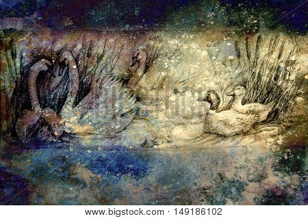 decorative drawing of swans and wild ducks swimming at pond with reeds.