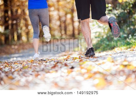 Close up, legs of runners jogging together outside in sunny autumn forest. Back view.
