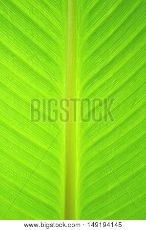 Close up of abstract green leaf texture