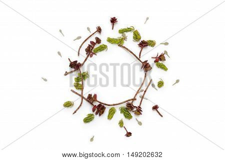 Floral round frame on white background. Flat lay top view. Ornament with succulents and blue little leaves with space for text.