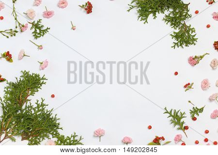Floral nature pattern on white background. Flat lay overhead view. Pink roses the fairy cotoneaster horizontal red berries and thuja occidentalis Danica evergreen plants frame with space for text.