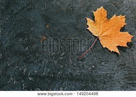 Black spotty background with fall maple leaf