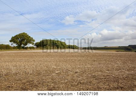 Harvested Fields And Woodland