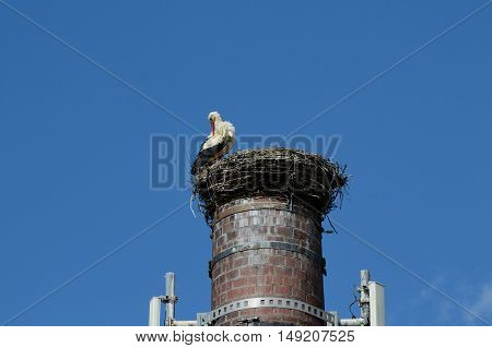 Stork in nest on chimney dressing its feathers