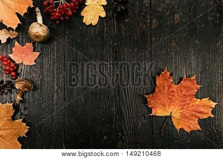 Background of fall maple leaves and fruit. Flat lay