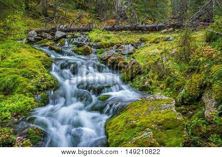 Small wild stream in autumnal forest landscape