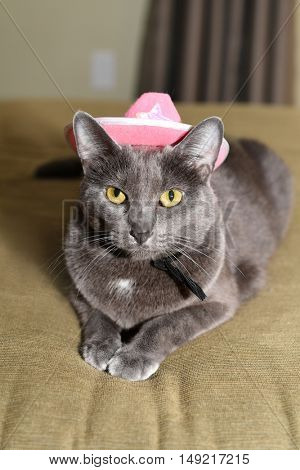 Korat cat wearing pink hat indoors