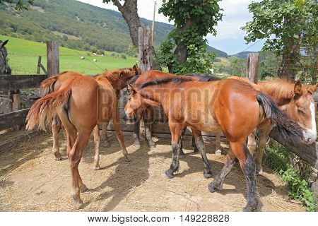A group of three young horses in the corral