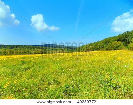 Big green meadow and deciduous in background, blue sky during sunny day