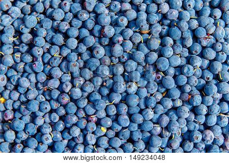 Healthy and delicious organic forest blueberries background.