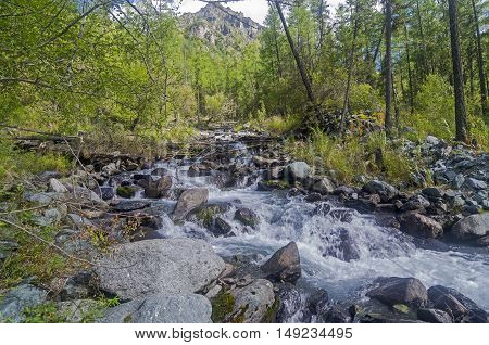 Stream in the Altai Mountains Russia. Sunny summer day.