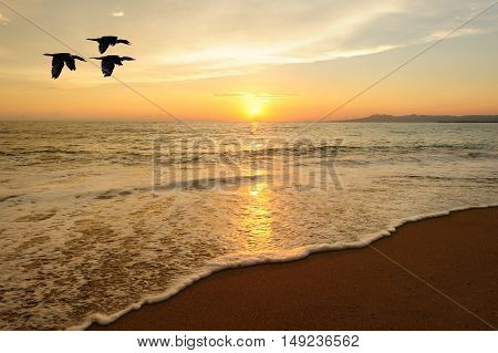 Birds flying is three seabirds flying over the water as the sun sets on the colorful ocean horizon.