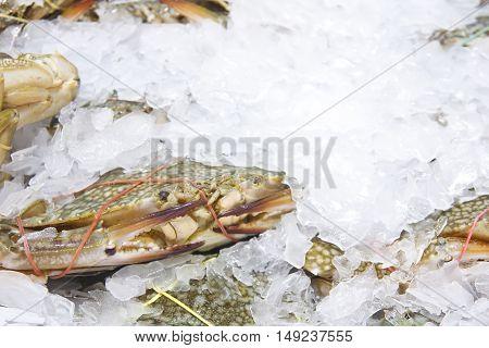 horse crab flower crab blue crab blue swimmer crab blue manna crab sand crab portunus pelagicus or sea crab on ice in the market for sale