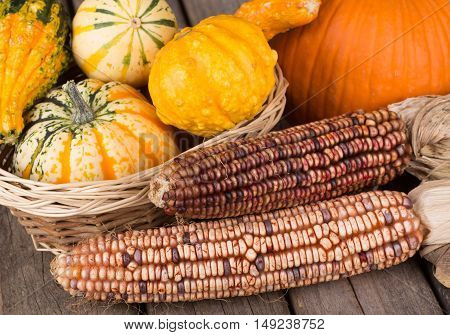 Autumn indian corn with squash and gourds on a wooden surface