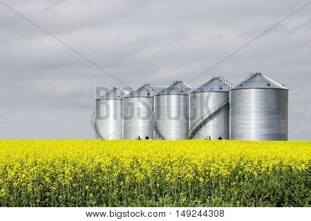 horizontal image of five round steel grain bins sitting in a yellow canola field under a very cloudy sky in the summer.